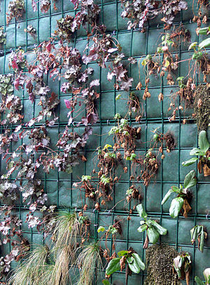 Detail of a Green Wall in a Retirement home (e...